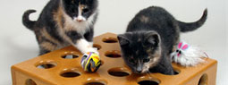 11 Cat Gadgets for Cat Lover