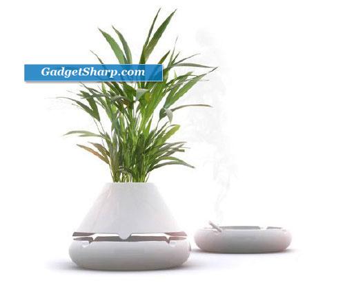 Plant Astray