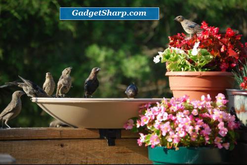 Bird Bath Bowl with Tilt-to-Clean Deck Rail Mounting Bracket