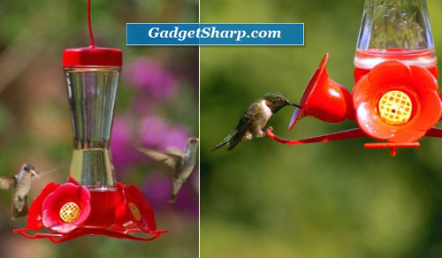 Pinch Waist Glass 8-Ounce Hummingbird Feeder