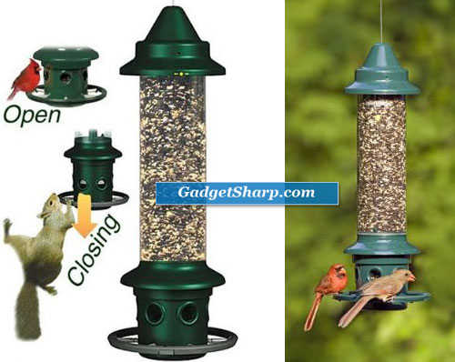 Squirrel Buster Plus Wild Bird Feeder with Cardinal Perch Ring