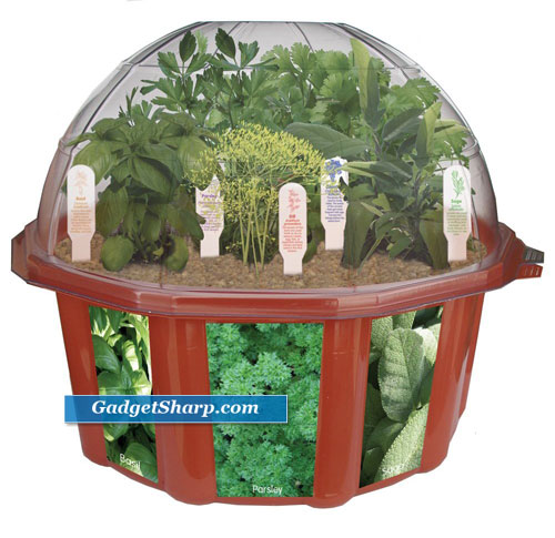Best Indoor Herb Garden Kits Gadget Sharp