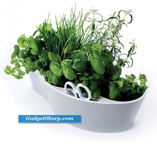 Best Indoor Herb Garden Kits Gadget Sharp