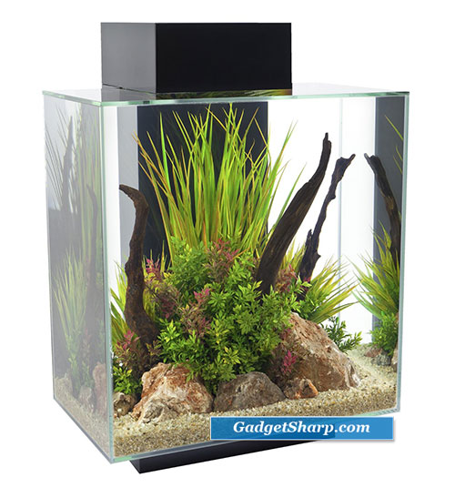 Cool Aquariums