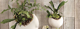 Two Beautiful Wall Planters to Create a Hanging Garden