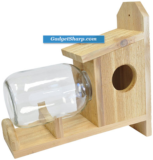 Squirrel Feeder