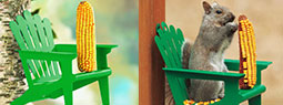 4 Interesting Squirrel Feeder Designs