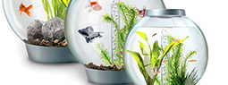 biOrb Aquarium: a Combination of fish bowl and Hi-Tech aquarium